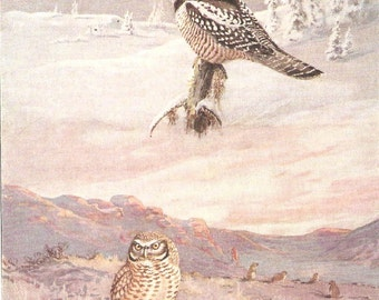 Vintage Bird Print, Book Plate, Owl, Hawk Owl, Burrowing Owl, Antique Bird Illustration, 1930s