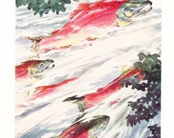 1939 Fish Print - Red Salmon - Vintage Antique Nature Science Animal Art Illustration Cabin Cottage Home Decor for Framing