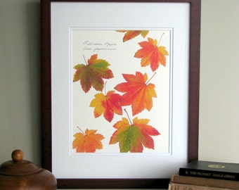 Pressed leaves print, 11x14 double matted, Full Moon Maple leaves, bright fall autumn color, wall decor no. 0042