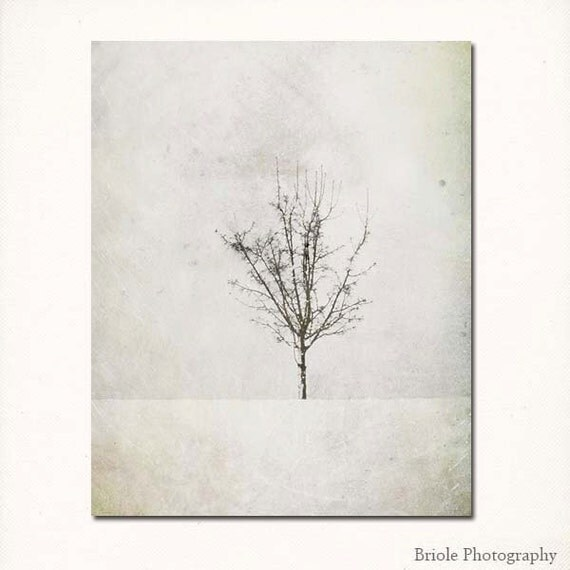 "Single Winter Tree Photograph. ""Solitary"" Fine Art. Wall Art. Snowy White Modern Minimalist. 8x10, 11x14, 16x20, 20x24, 24x30, 24x36, 30x40"