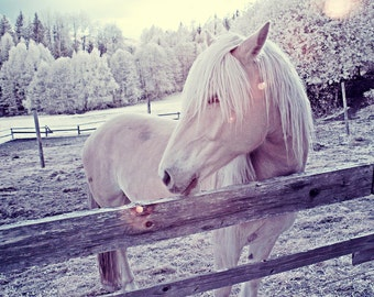 Sunset Horse - Infrared - Art Photograph - Scenery - Landscape - Animals - Country side - Oslo, Norway