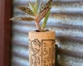 Succulent Cork Magnet,  Grape Kalanchoe