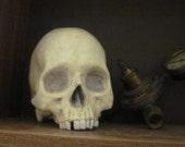 Human Skull -realistic replica cast in plaster