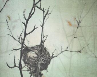 Nature Photography Bird Nest Wall Art Mint Green Grey Brown 8x10 Winter Branch Bird Nest Photograph
