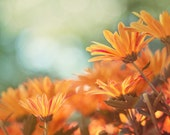 Flower Photography, Aqua and Orange Wall Art, Fall Colors, Autumn Decor, Chrysanthemums Colorful Floral Home Decor Picture of Orange Flowers