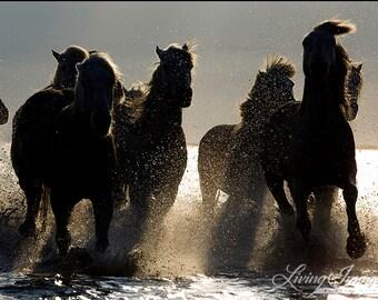 Dark Horses IV - Fine Art Horse Photograph - Horse - Camargue - Silhouette - Fine Art Print