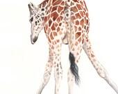 Giraffe painting - G064- wildlife art animal safari -  Print of watercolor painting-  5 by 7 print, giraffe watercolor painting