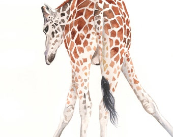 Giraffe painting - G064- nature natural wildlife art animal safari -  Print of watercolor painting-  5 by 7 print