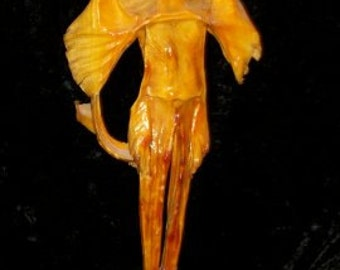 """Devil Fish, Mummified, very intact, excellent condition, 22"""" long"""