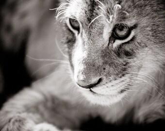 Lion Cub Photograph - Wildlife Art Photography - Black and White Animal Home Decor - Monochrome Fine Art Photography