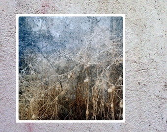 LIMITED EDITTION fine art photography print 5X5 gold silver twigs, sepia, retro, shabby chic home gift, nature decor office, square, mistic
