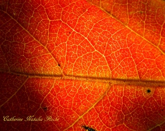 Persimmon Leaf, Autumn Leaves, Orange Leaves, October, Autumn Photography, Orange Photography,  Leaf Photography, Catherine Natalia Roché