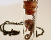 Sea Horse Necklace, Specimen Necklace, Glass Vial Necklace