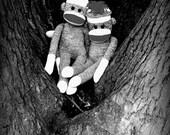 Sock Monkey Art - Best Friends - Photograph - Nursery, Playroom, Humor, Whismical Art