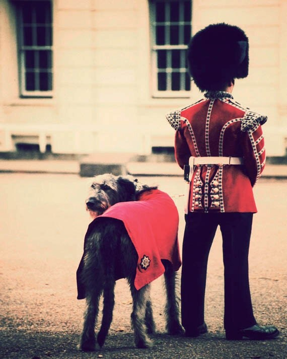 London photograph, 8x10 fine art print, retro travel photography, Man's Best Friend, red, vintage England, whimsical dog print
