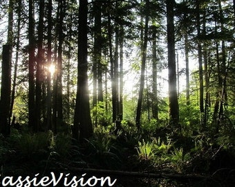 Forest Sunlight- Pacific Northwest- Washington- Evergreen State- Nature- 5x7 Digital File- Instant Download