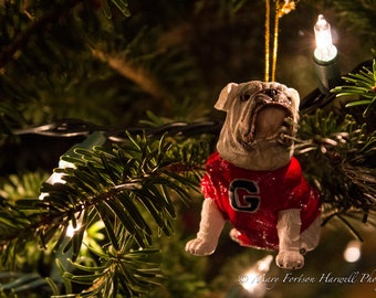 Photo: Georgia Bulldog Christmas (12x8)