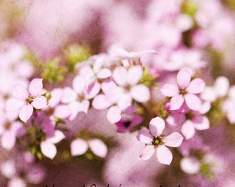 Delicate pink flowers  -  Art Photography & Home Decor,  Wall Art,  Nature, flowers, pink