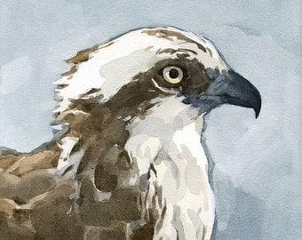 Osprey Watercolor Painting - 5x5 Bird Print