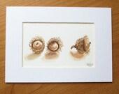 Acorn illustration, original watercolor and brown ink drawing of bur oak acorns // nature art // woodland art // sepia illustration