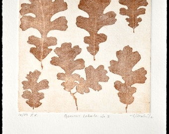 QUERCUS LOBATA No. 2, original copperplate etching, fine art printmaking, Valley Oak leaves in warm browns