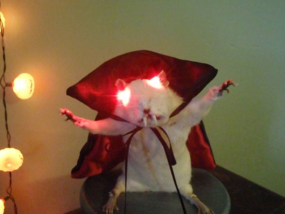 Taxidermy Vampire Rat with flashing red LED eyes