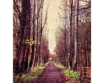 Fine Art Photography Digital Download Pathway Woodland Autumn Leaves Purple Printable Art Photo Photograph
