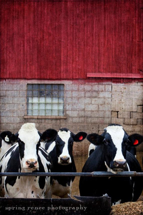 Primitive Cow Doll, Holstein Cows, Primitive Animals ... |Holstein Cow Decorations