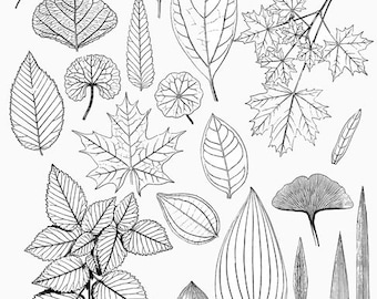 Leaves drawings | Etsy