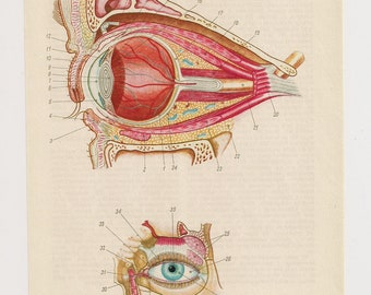 2 Vintage Anatomical Prints eye bones skull Medical Diagrams illustrations Anatomy Print  Paper Ephemera Old Victorian