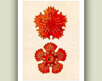 Ocean starfish Print, Sea star Print 8 ,  Nautical  Art Print, Matte Print 5x7