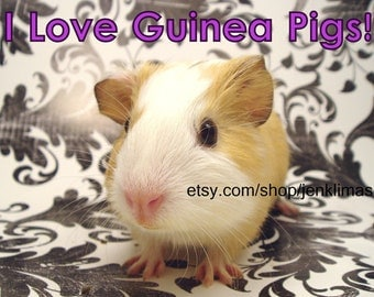 """I LOVE GUINEA PIGS Baby Cavy Photograph - Limited Edition 8x10"""" Photograph"""