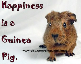 "Newborn Brown Baby Guinea Pig 8x10"" Photograph - HAPPINESS is a GUINEA PIG"