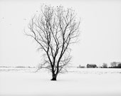Snow on Farmers Fields - Black and White Photograph
