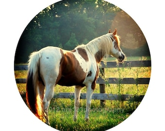 Horse Decor Rustic Photography Animal Photo Summer Wall Art  Circular Image on an 8x10 inch Fine Art Photography Print Evening Sun