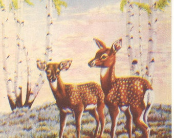 fawns in the spring time post card by Dot Larsen