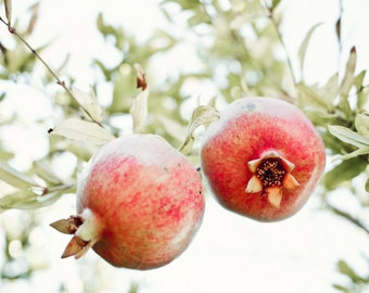 Botanical photography print red pomegranate dining room wall art - Pomegranate Tree