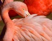 Bird Photography Pink Flamingo Fine Art Nature Deocr Pink Feathers Decor Florida Decor Animal Decor Wall Decor Childrens Room Nursery Decor