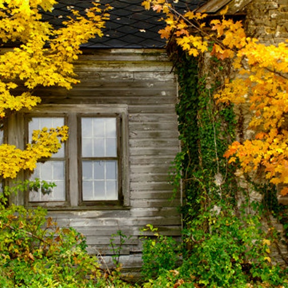 Old House Window Farm Window Golden Maples Autumn 5 x 7 Photo Brown Gray Green Color Nature Photography and Rural Home Office Decor Art Fine