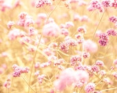 Pink flowers, shabby chic, nature photography, autumn flowers, amber, honey gold, honeysuckle pink, feminine, BFF, bokeh, landscape