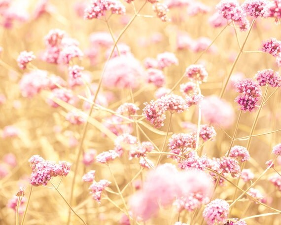 Pink flowers, shabby chic, nature photography, autumn flowers, amber ...