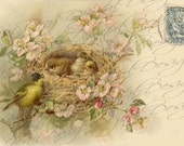 """French Birds & Nest in Rose Bush instant download """"Affectionately Yours"""" 1904 Stamp, French Postcard FrA128"""