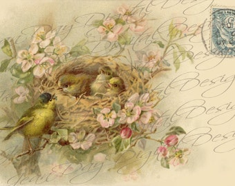 "French Birds & Nest in Rose Bush instant download ""Affectionately Yours"" 1904 Stamp, French Postcard FrA128"