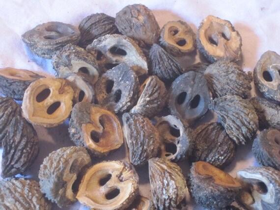 Owl Eyes Black Walnut Shell Halves By Doezhart On Etsy