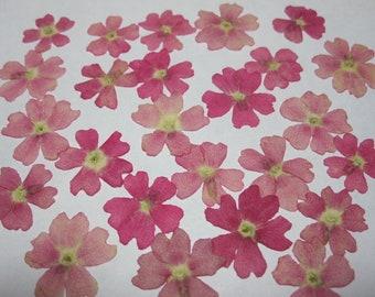 Dried Pressed Flowers for Crafting - Pink Verbenas