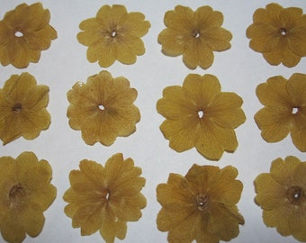 Dried Pressed Flowers for Crafting - Yellow Primrose