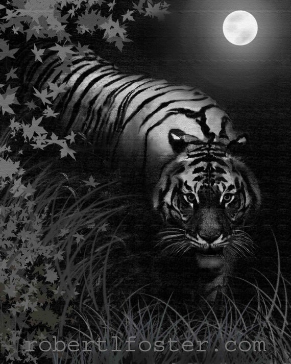 Tiger Art Night Tiger Wildlife Art Tiger Print By Lewfoster