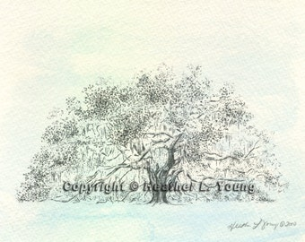 Majestic Live Oak Tree Drawing in Icy Blue Savannah Watercolor Painting