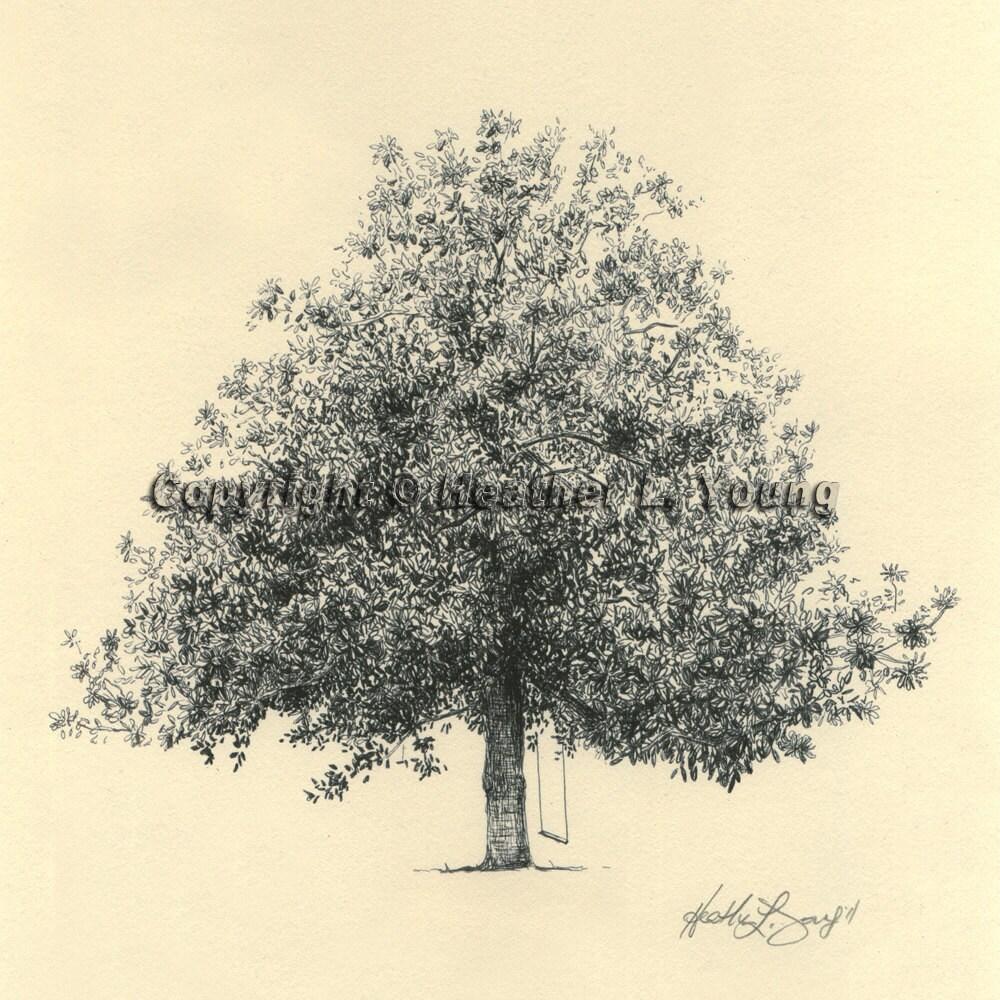 magnolia tree drawing fine art print in natural gordonston. Black Bedroom Furniture Sets. Home Design Ideas