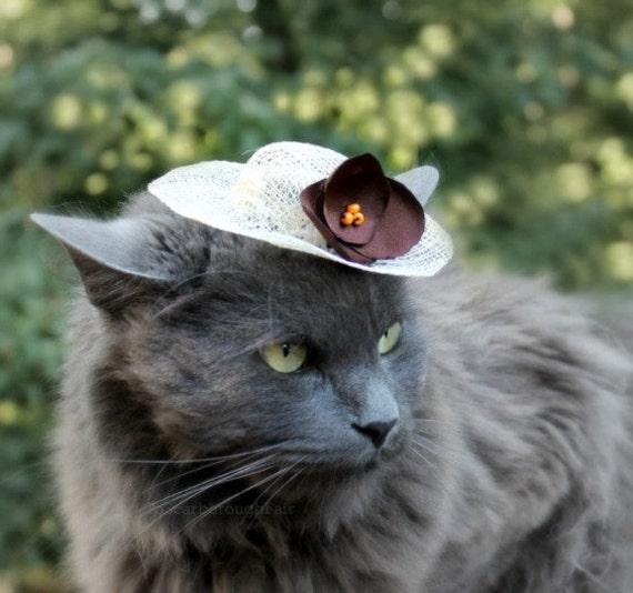 Spring Hat for Cat - French Roast - Sinamay Pet Hat - Cat Bonnet
